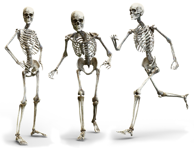 3 Menschliche Skelette